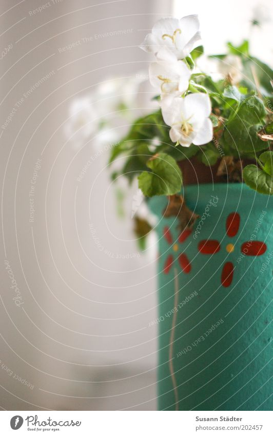 Beautiful Flower Plant Blossom Growth Kitsch Decoration Living or residing Uniqueness Turquoise Beautiful weather Shriveled Window Flowerpot Window board