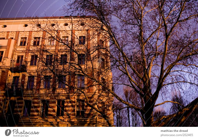 Nature Beautiful Sky Tree House (Residential Structure) Berlin Wall (building) Window Wall (barrier) Building Architecture Environment Facade Violet Branch