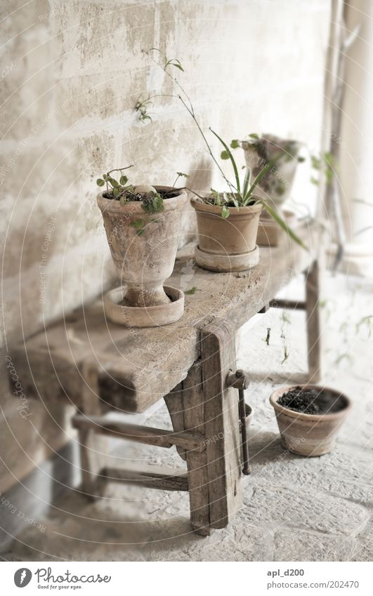 Nature Old Flower Green Plant House (Residential Structure) Wall (building) Gray Wall (barrier) Brown Table Places Bench Stand Authentic Living or residing