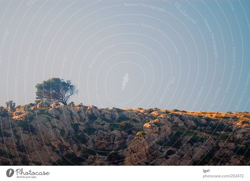 Sky Nature Tree Vacation & Travel Loneliness Landscape Horizon Rock Esthetic Climate Hill Longing Serene Beautiful weather Respect Wanderlust