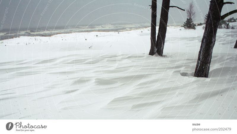 Woe Woe Environment Nature Landscape Elements Sky Cloudless sky Horizon Winter Climate Gale Snow Tree Coast Baltic Sea Ocean Simple Cold Gray White Loneliness