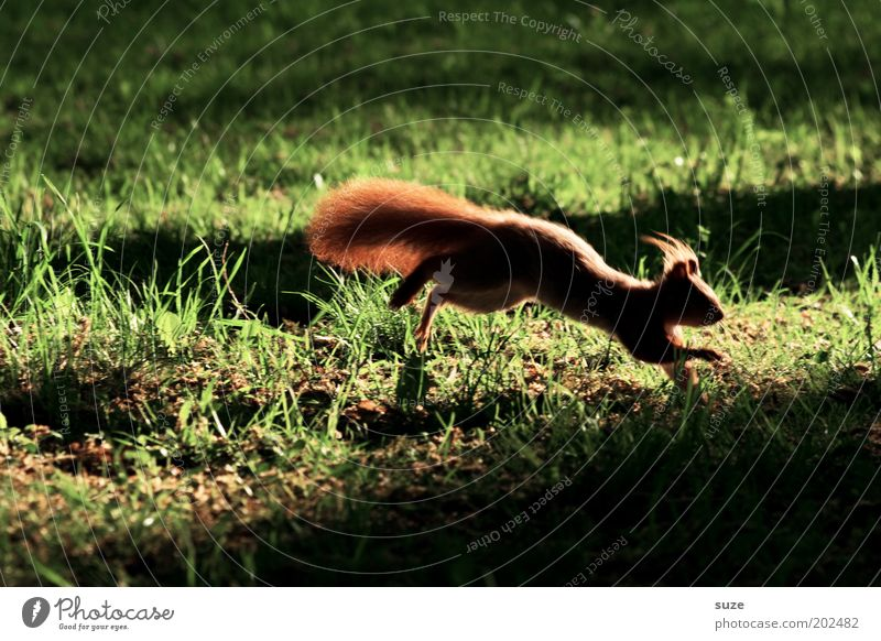 technology advantage Garden Environment Nature Animal Grass Park Meadow Wild animal Squirrel Rodent 1 Running Jump Authentic Small Cute Green Fear Timidity