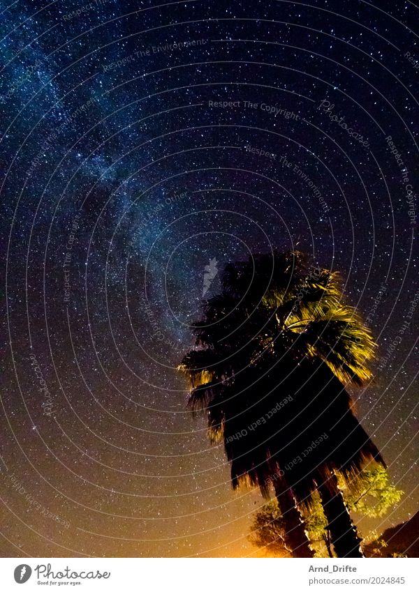 Milky Way behind palm trees Vacation & Travel Far-off places Expedition Nature Landscape Sky Night sky Stars Old Gigantic Blue Yellow Universe Starlit