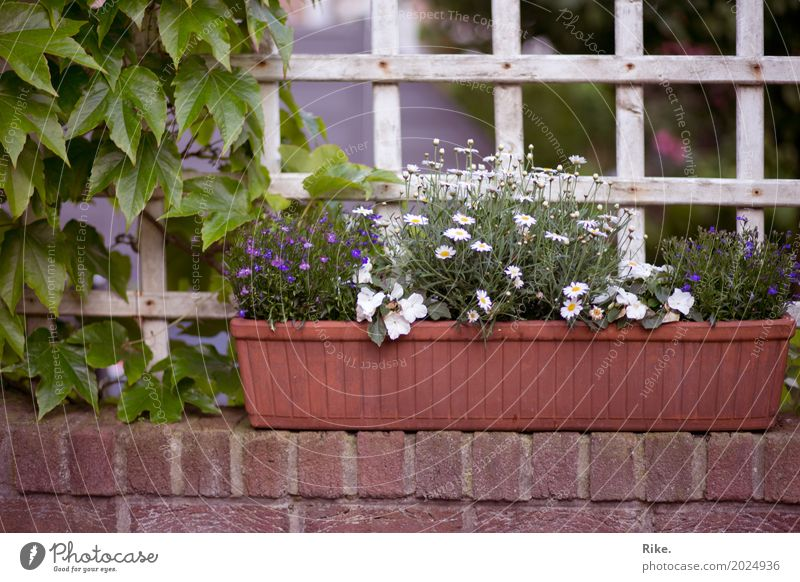 Nature Plant Summer Beautiful Flower Relaxation Environment Spring Wall (barrier) Garden Leisure and hobbies Living or residing Park Decoration Idyll Blossoming