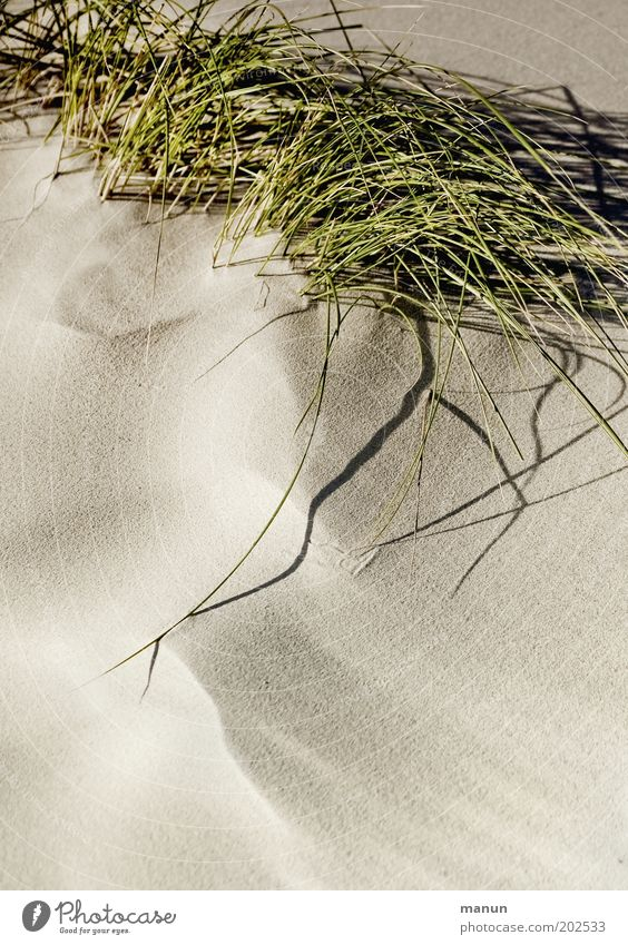 sand Calm Nature Sand Plant Grass Bushes Wild plant Marram grass Beach Warmth Soft Idyll Environmental protection Colour photo Structures and shapes