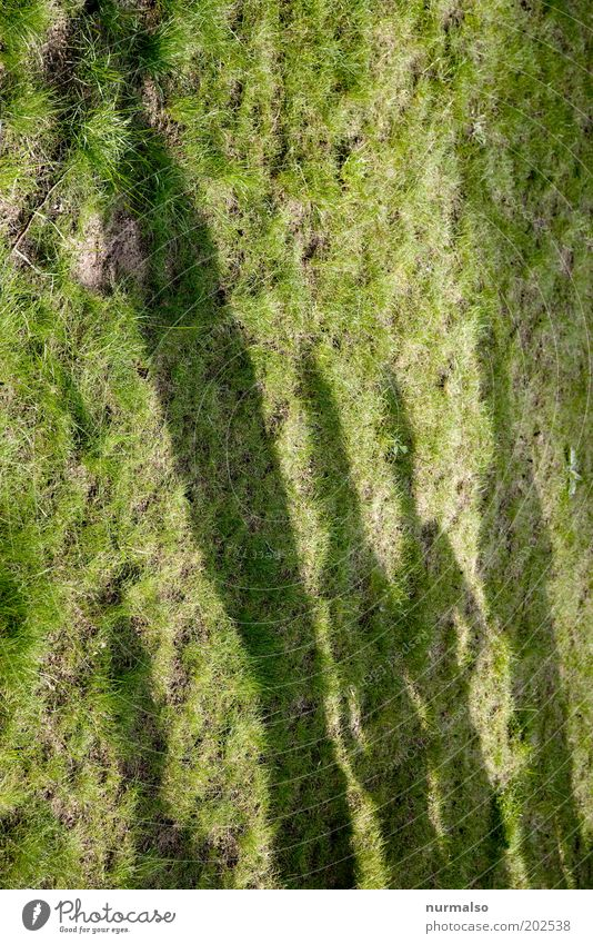 shadowy existence Beautiful Human being Masculine 4 Group Grass Stand Wait Green Attachment Colour photo Shadow Silhouette Shadowy existence Size difference