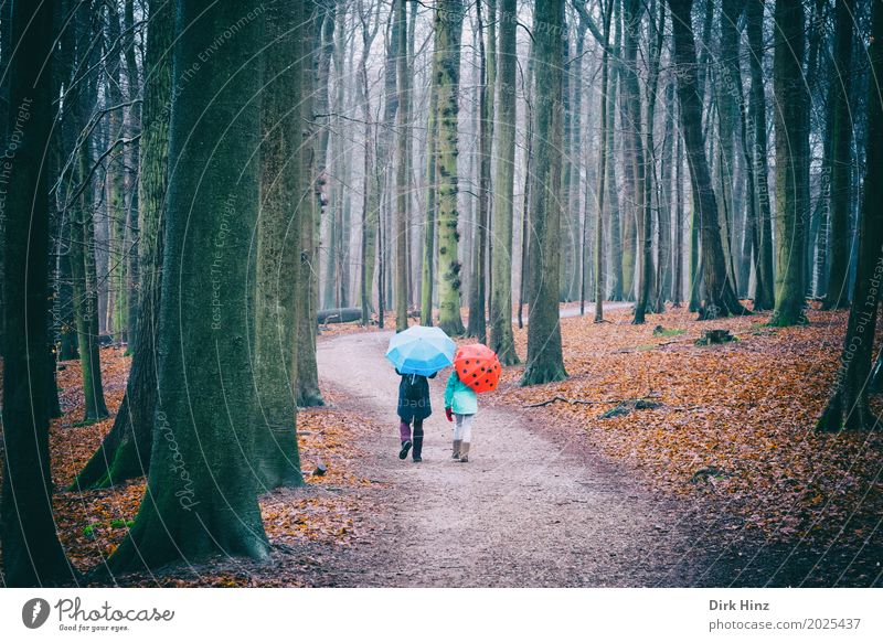 Human being Blue Tree Red Forest Autumn Together Going Rain Leisure and hobbies Weather Threat Footpath To go for a walk Umbrella Promenade