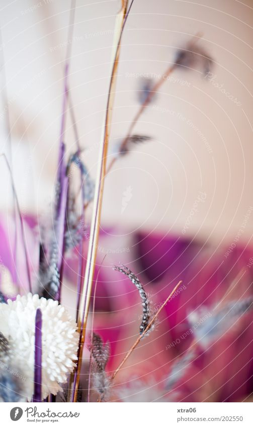 Feather Kitsch Decoration Bouquet Arts and crafts  Flower Animal Plant Flower arrangement