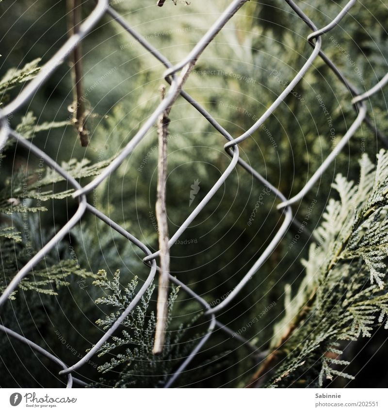 Nature Plant Environment Bushes Authentic Natural Fence Fern Foliage plant Wire netting fence Boundary line