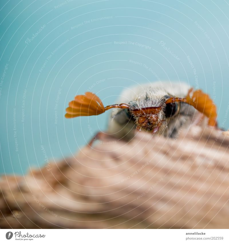 Nature Blue Eyes Animal Brown Small Sit Animal face Wing Insect Wild animal Cute Beetle Feeler Crawl