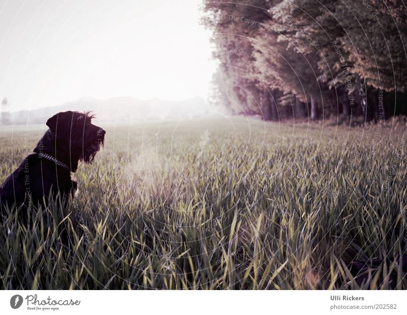 Nature Summer Vacation & Travel Animal Forest Grass Freedom Dog Landscape Field Environment Trip Bushes Leisure and hobbies Observe Beautiful weather