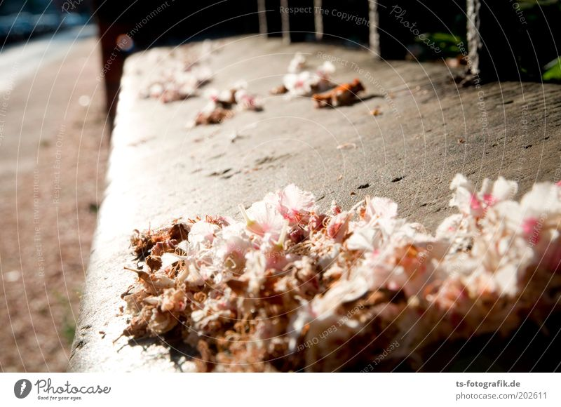 White Plant Summer Blossom Spring Gray Stone Sadness Pink Environment Concrete Perspective Growth Soft Change Transience