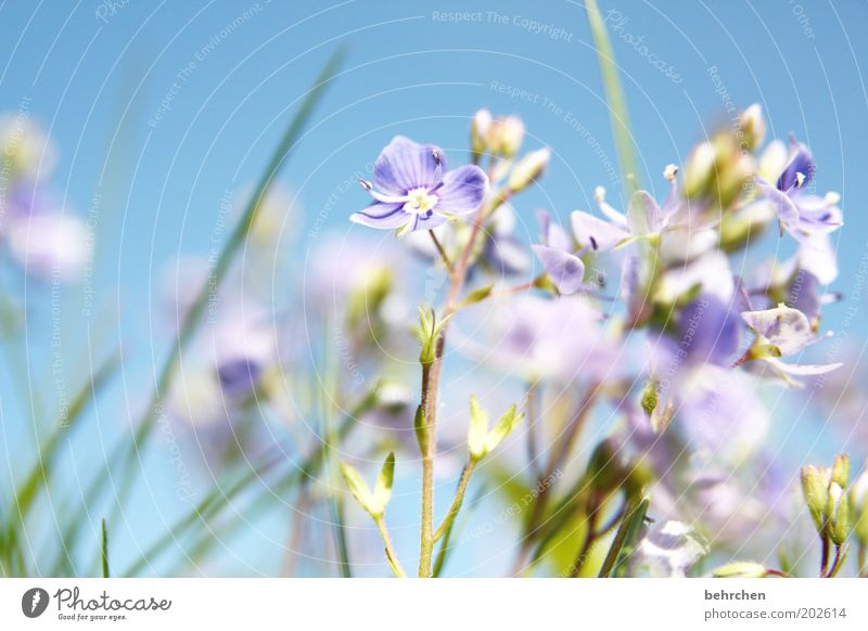 Nature Beautiful Sky Flower Blue Plant Summer Meadow Blossom Grass Spring Garden Landscape Field Environment Growth