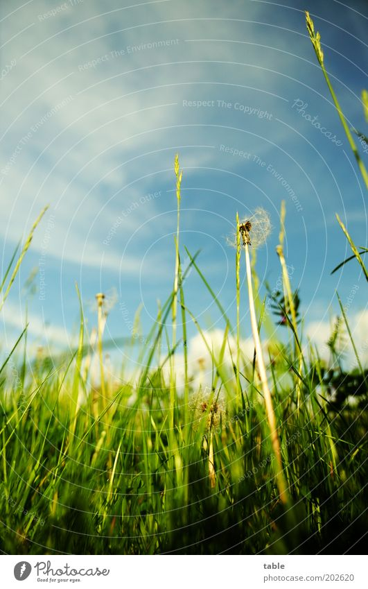 Nature Sky Green Blue Plant Summer Clouds Relaxation Blossom Grass Spring Contentment Environment Growth Peace