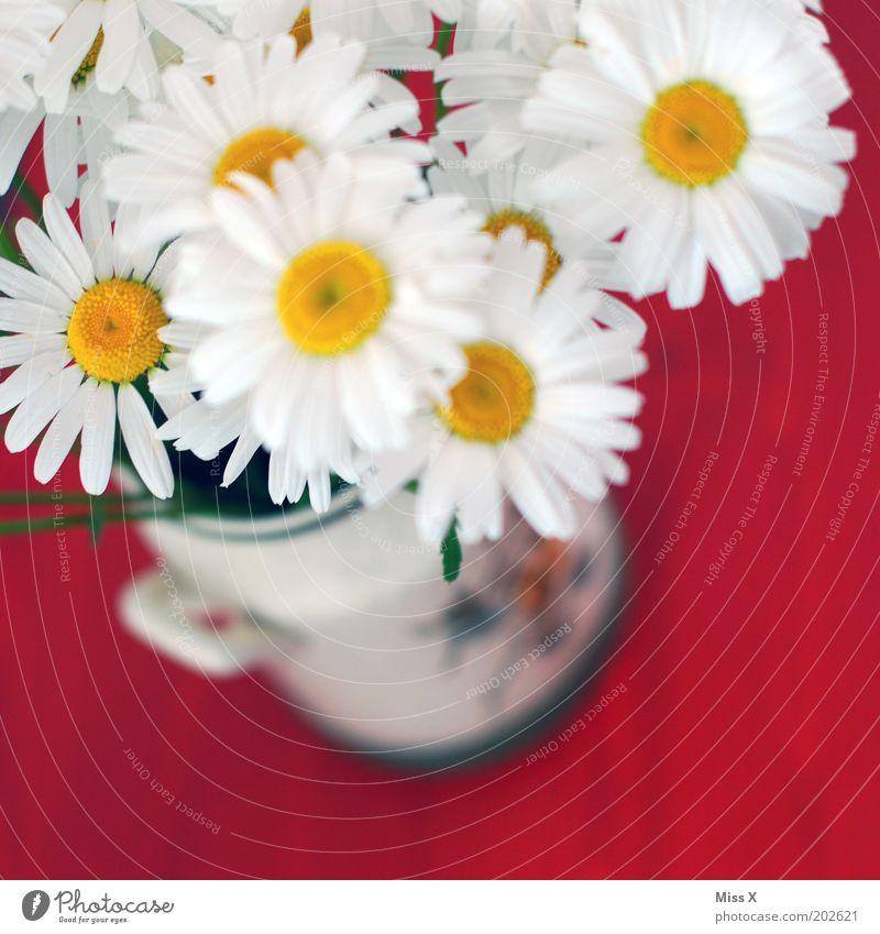 White Flower Plant Red Blossom Blossoming Fragrance Bouquet Vase Marguerite