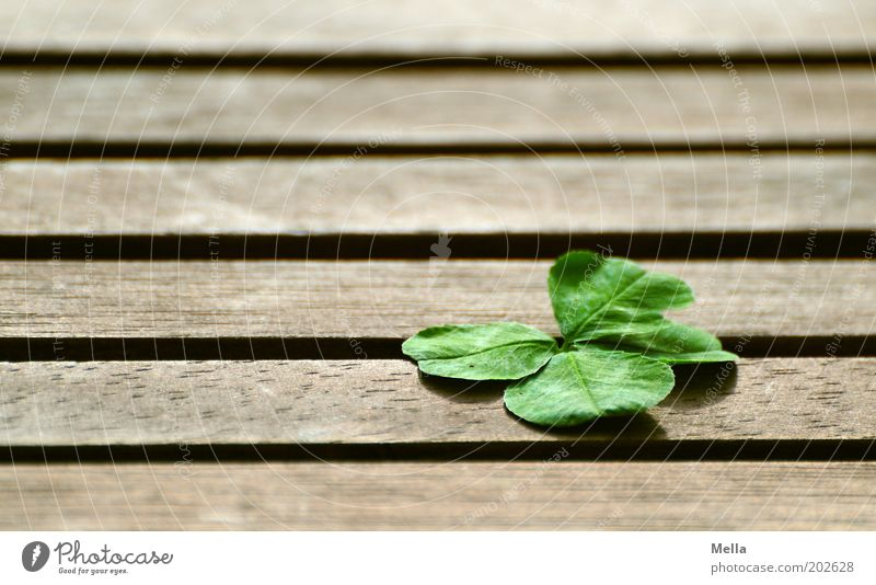 The happiness thing Nature Plant Cloverleaf Wood Sign Line Stripe Four-leafed clover Good luck charm Lie Simple Positive Emotions Happy Belief
