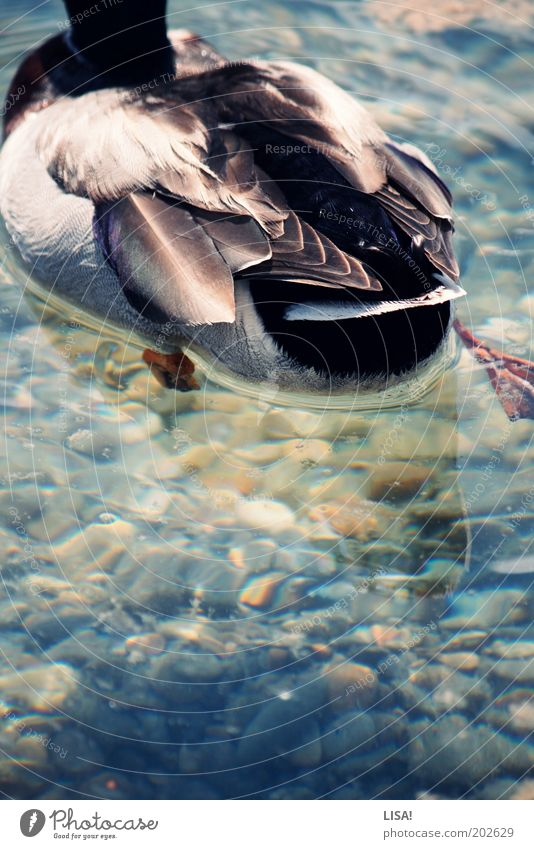 Nature Water Green Blue Red Summer Black Animal Gray Stone Lake Brown Bird Feather Wing