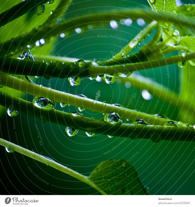 Life Green Nature Plant Water Drops of water Spring Weather Rain Bushes Foliage plant Wet Colour photo Multicoloured Exterior shot Close-up Detail