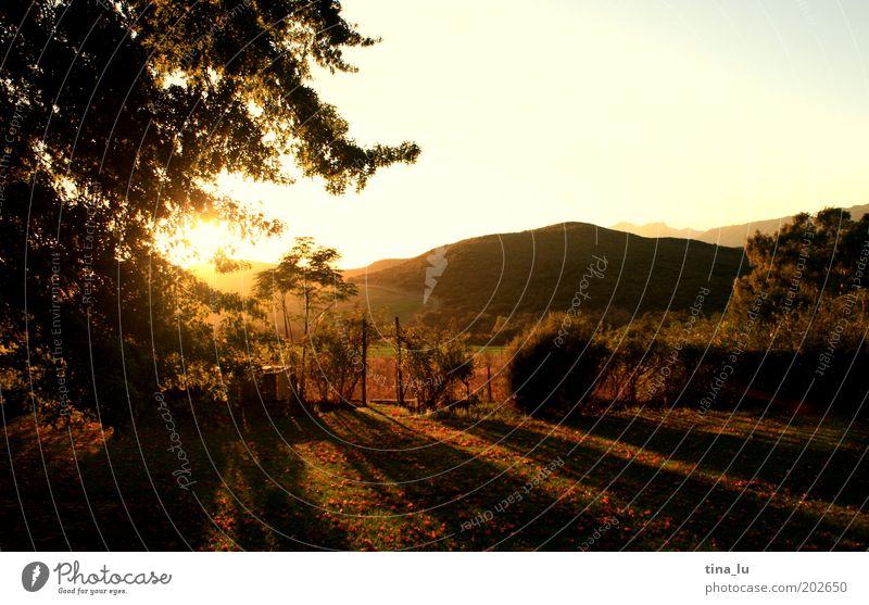 sunrise sunrise Elegant Landscape Sunrise Sunset Sunlight Tree Cape Town South Africa Fragrance Discover Esthetic Moody Warm-heartedness Idyll Vacation & Travel