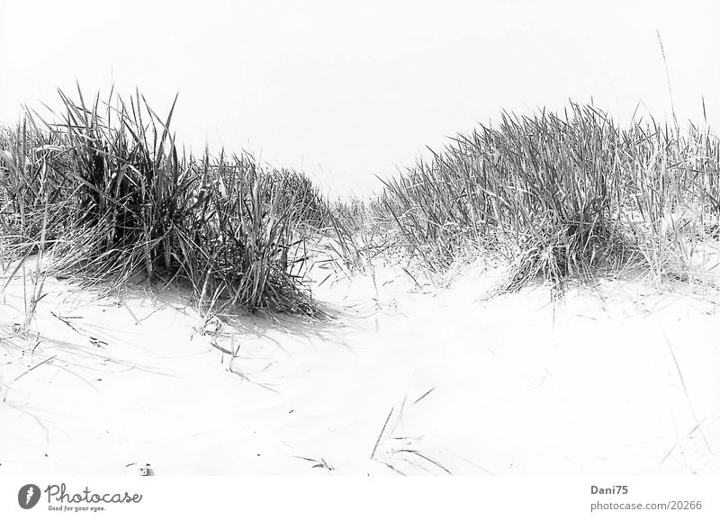 dune Beach Ocean Beach dune Sand