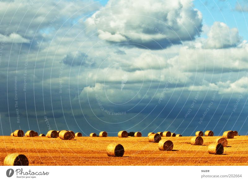 thanksgiving Summer Environment Nature Landscape Elements Sky Clouds Climate Beautiful weather Warmth Field Blue Yellow Gold Coil Bale of straw Harvest