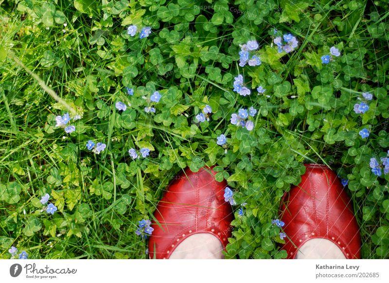 Human being Nature Flower Green Red Summer Life Meadow Grass Spring Garden Feet Park Footwear Contentment Environment