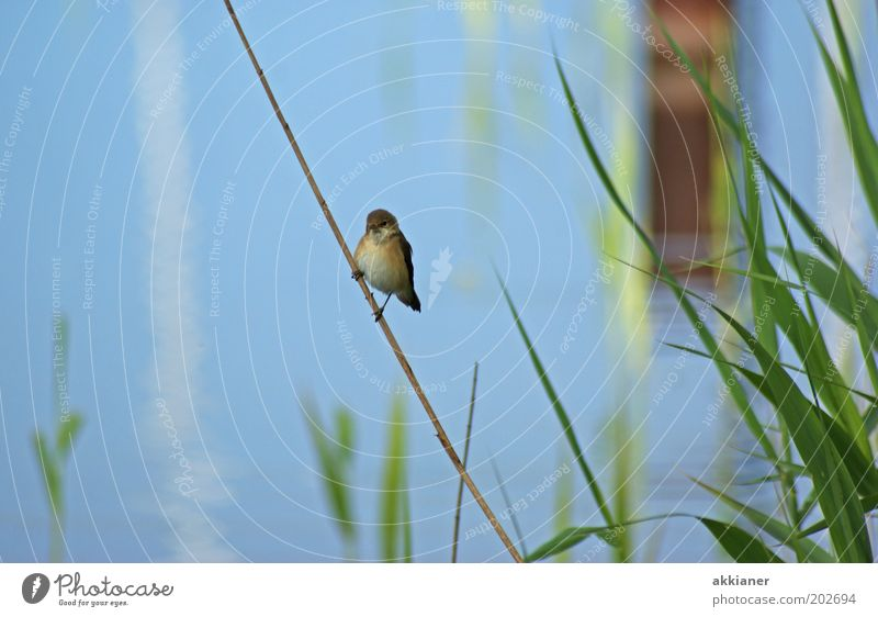 Nature Water Green Blue Plant Animal Bright Bird Coast Environment Sit Wild animal Lakeside Sparrow Lake