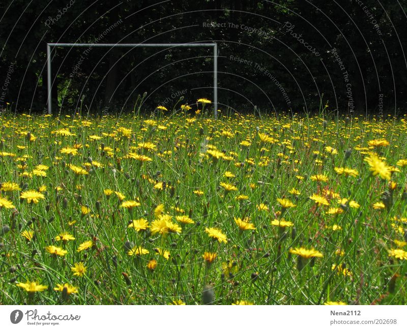 Crew wanted... Summer Soccer Football pitch Nature Spring Flower Grass Blossom Wild plant Meadow Blossoming Yellow Green Goal Soccer Goal Flower meadow