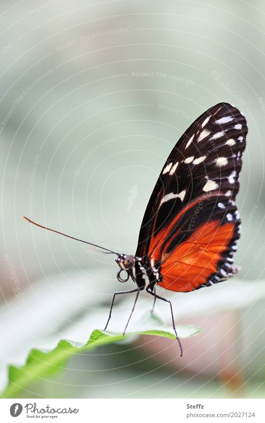 Nature Beautiful Green Leaf Animal Calm Black Legs Orange Copy Space Elegant Idyll Wing Romance Delicate Butterfly