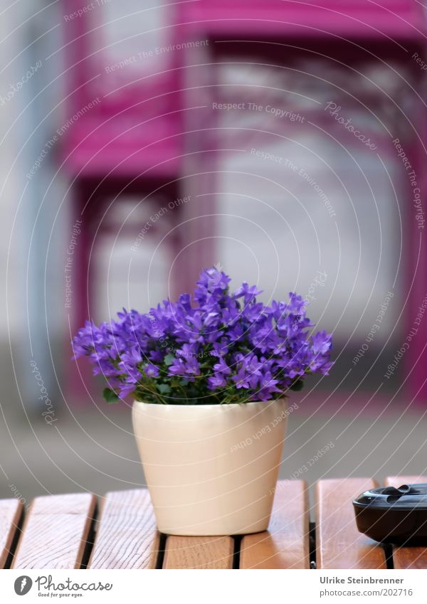 Purple break (AST HH 5/10) Table Restaurant Gastronomy Flower Violet Pink Beer table Bench Table decoration Chained up Flowerpot Closed Folding table Seating