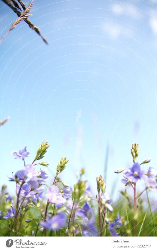 Nature Beautiful Sky Flower Blue Plant Summer Clouds Meadow Blossom Grass Spring Garden Happy Park Field