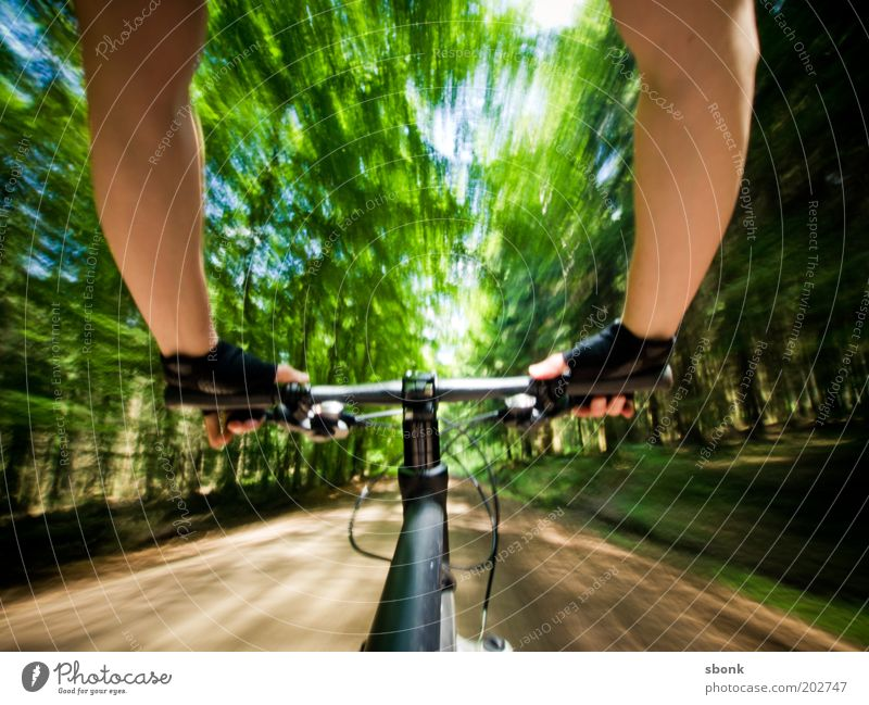 Human being Man Youth (Young adults) Vacation & Travel Summer Tree Sun Joy Adults Forest Sports Movement Young man Healthy Bicycle 18 - 30 years