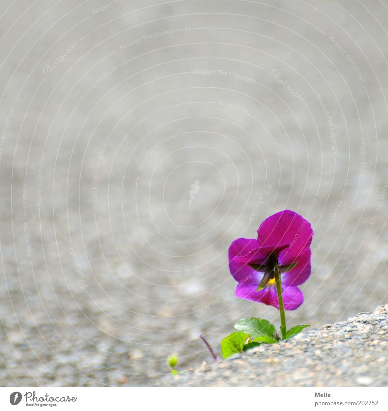 Nature Beautiful Flower Plant Street Life Emotions Blossom Stone Moody Power Small Environment Concrete Hope Growth