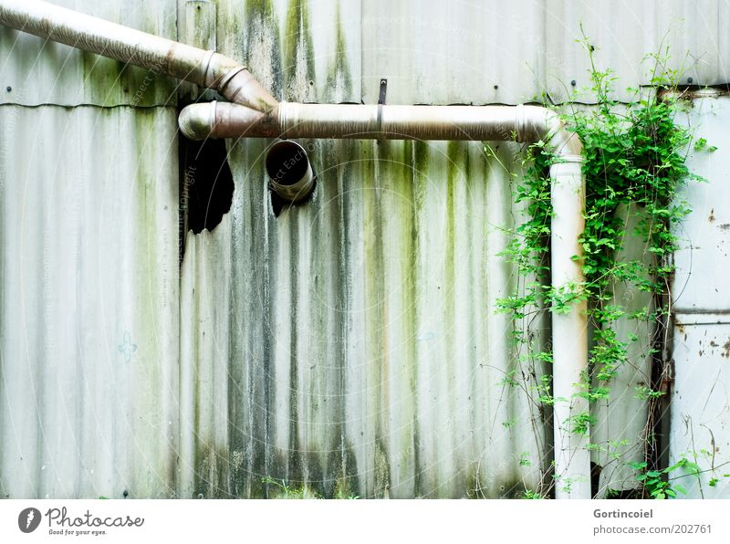 Nature Old Green Plant Building Dirty Facade Industry Factory Broken Derelict Pipe Decline Ruin Hollow Moss