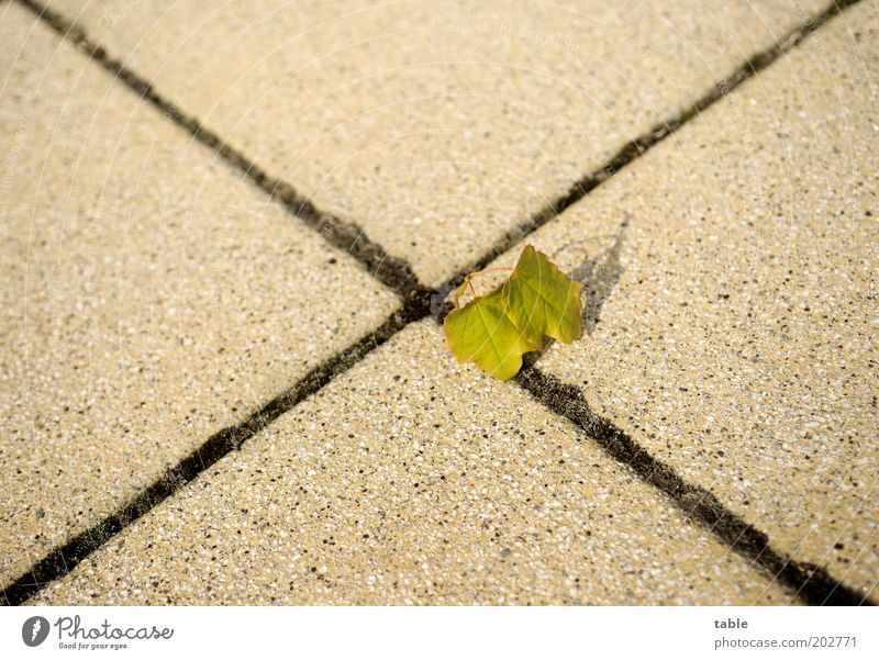 Nature Green Leaf Loneliness Environment Stone Small Line Concrete Beginning Stand Change Hope Seam Center point Road junction