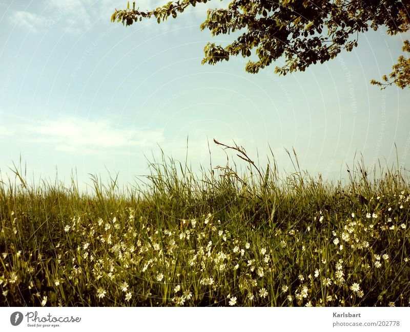 Nature Sky Tree Flower Summer Calm Relaxation Meadow Grass Spring Freedom Landscape Field Environment Growth Harmonious