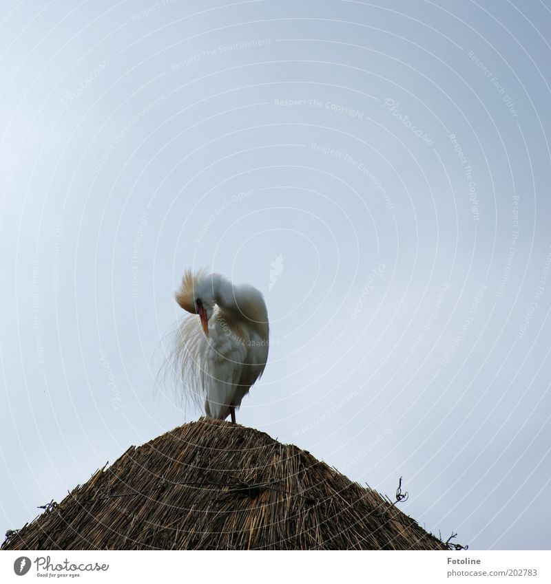 Nature Sky White Animal Gray Bright Brown Bird Feather Cleaning Wild animal Copy Space left