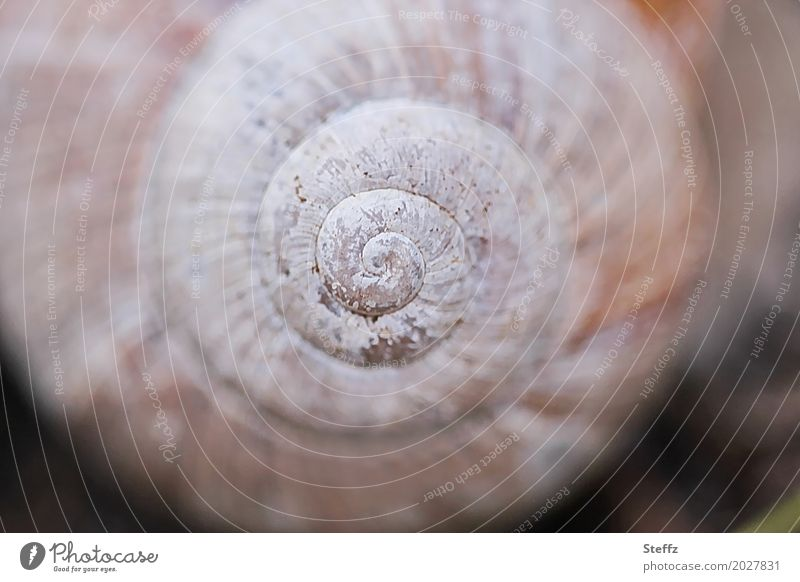 symmetry Nature Snail shell Round Beautiful Symmetry Structures and shapes Spiral Beige Harmonious Geometry Origin Tone-on-tone Subdued colour Exterior shot