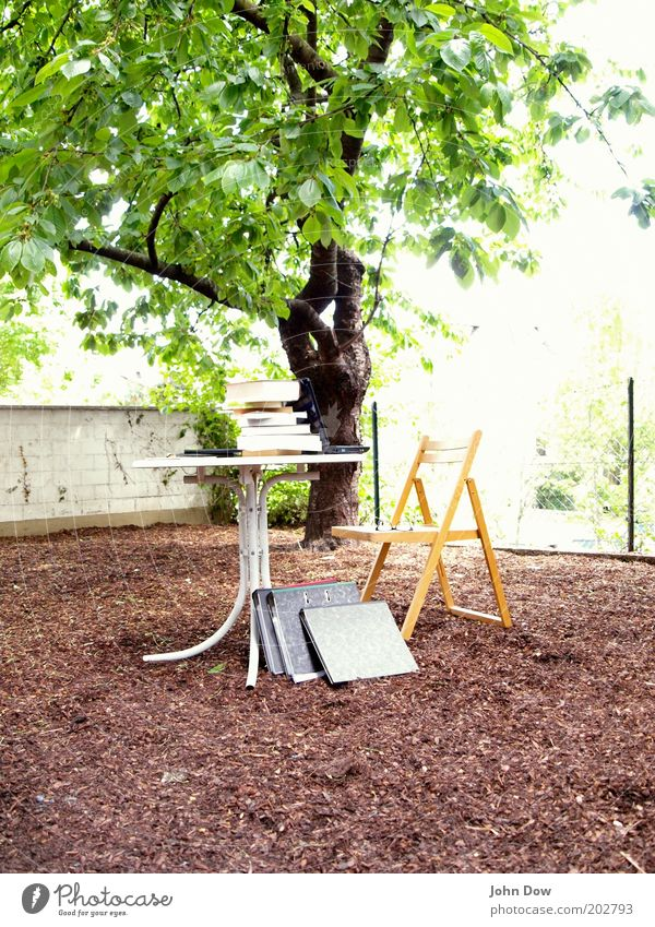 Nature Summer Tree Garden Air Exceptional Book Beautiful weather Bushes Study Academic studies Break Education Ecological Sustainability Workplace