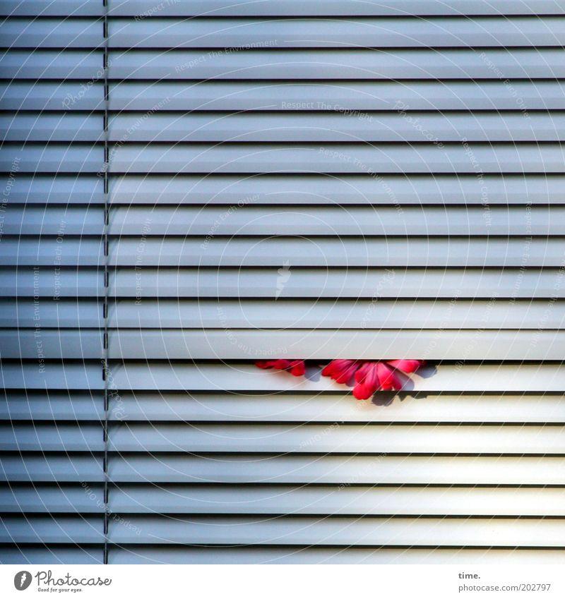 White Flower Window Closed Parallel Horizontal Venetian blinds Disk Slat blinds Slit Clamp Assertiveness Window decoration