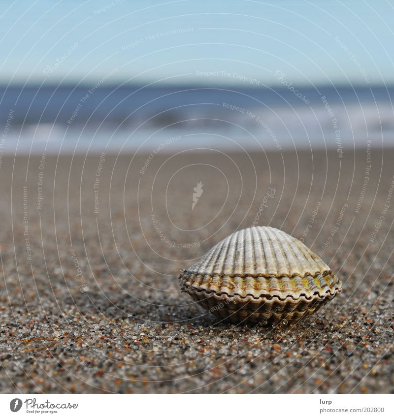 Ocean Blue Summer Beach Vacation & Travel Relaxation Freedom Sand Brown Waves Closed Island Tourism Baltic Sea Mussel North Sea