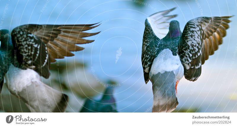 wings Animal Pigeon Wing 2 Discordant Symmetry Surprise Judder Escape Divide Colour photo Exterior shot Flying Irritation