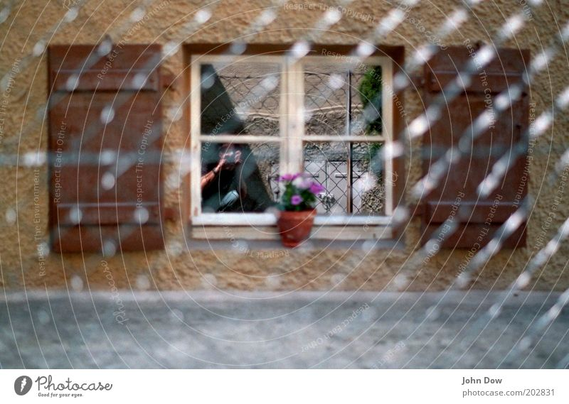 Flower House (Residential Structure) Window Metal Brown Car Window Net Protection Fence Watchfulness Barrier Take a photo Voyeurism Neighbor Mirror image