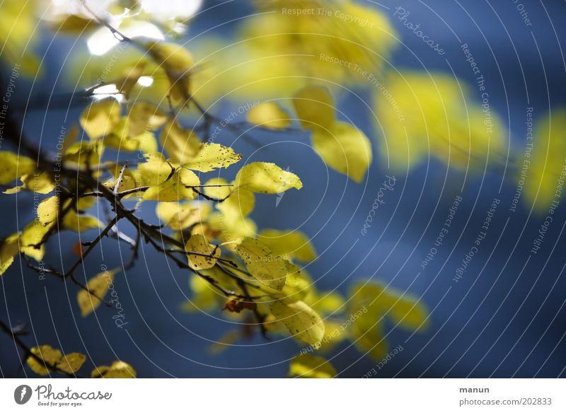 Nature Tree Blue Calm Leaf Yellow Colour Life Relaxation Autumn Fresh Esthetic Bushes Positive Ease Autumn leaves