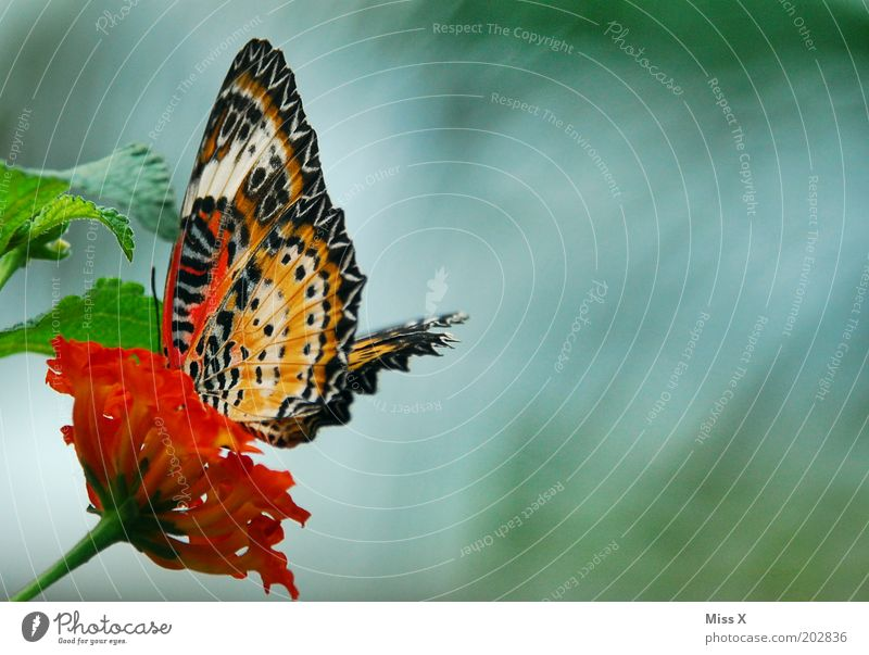 butterfly photo Leaf Animal Butterfly Wing 1 Exotic Colour photo Multicoloured Exterior shot Close-up Macro (Extreme close-up) Deserted Copy Space right