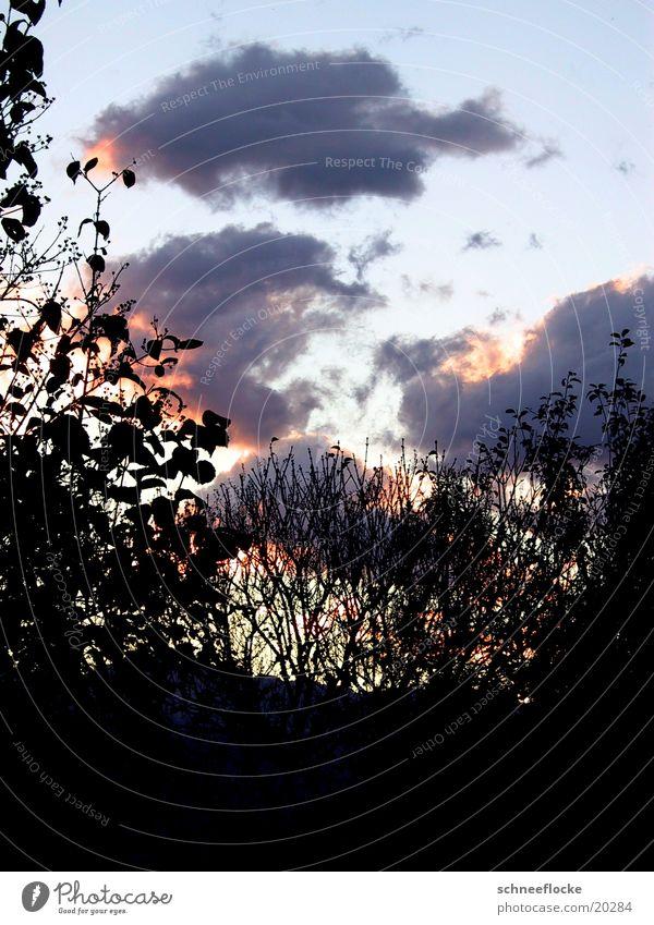 dawn Morning Clouds Dawn Silhouette Colour
