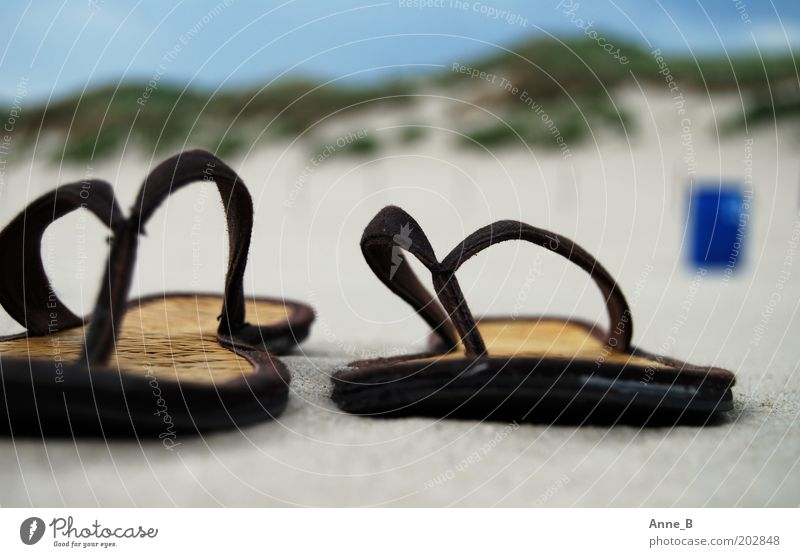Hennes and Mauritz on the beach Summer Summer vacation Beach Nature Landscape Sand Coast Footwear Flip-flops Relaxation Hip & trendy Uniqueness Near Blue Brown