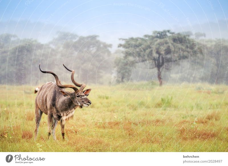 Vacation & Travel Beautiful Animal Far-off places Forest Meadow Grass Exceptional Freedom Tourism Trip Field Wild animal Fantastic Adventure Observe