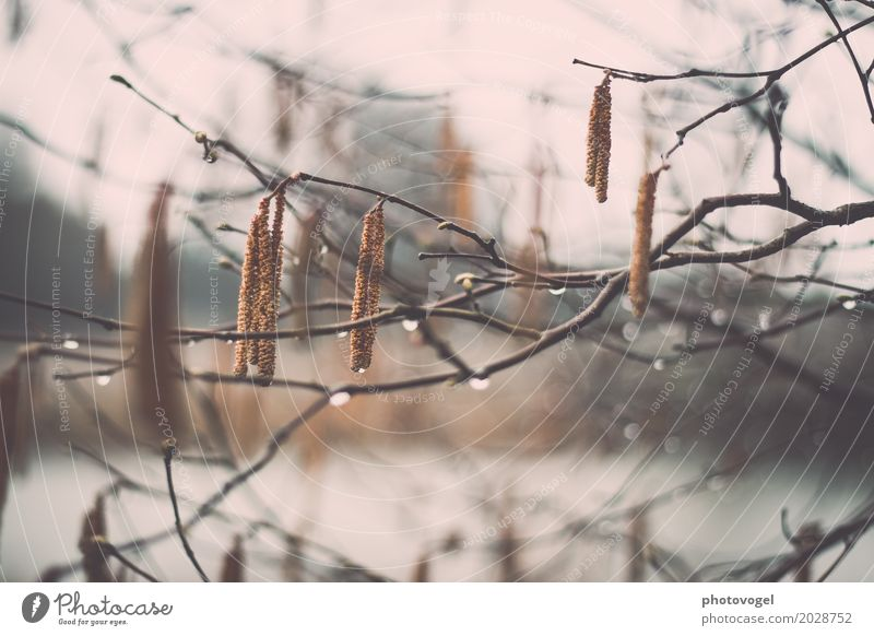 hang out Environment Nature Plant Water Autumn Bad weather Rain Bushes Wet Natural Brown Gray Green Drop Branch Cold Colour photo Exterior shot Close-up Detail