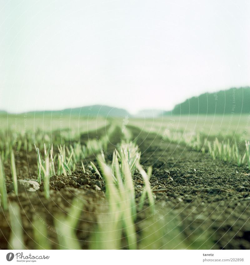 growth Landscape Earth Spring Field Growth Shoot Bright Time Green Far-off places Sustainability Agriculture Colour photo Exterior shot Close-up Deserted